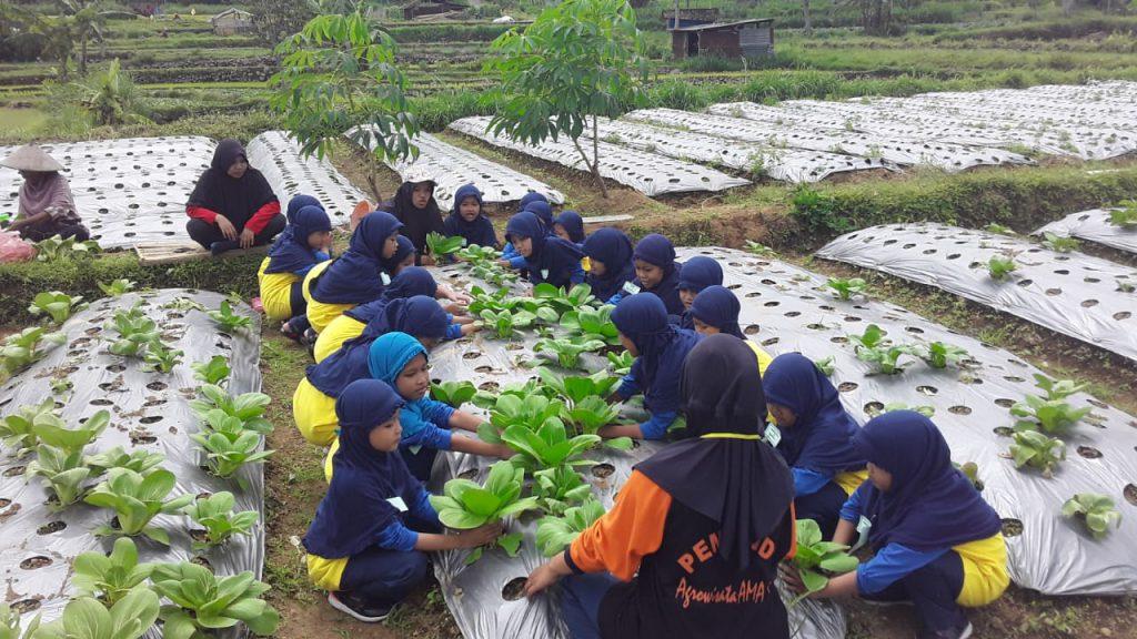 Asyiknya Siswa SD Muhammadiyah 2 Kauman Bertani di Karanganyar